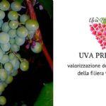 Come valorizzare l'uva immatura e la feccia?